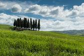 Landscape in Tuscany — Stock Photo