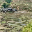 Rice field in Vietnam — Stock Photo