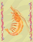 Krevety ilustrativní — Stock fotografie