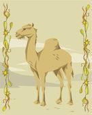 Camel belysande — Stockfoto
