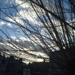 Stock Photo: Sky scenery through tree branch