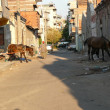 Gypsy horses are feeding on streets - Stock Photo