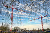 Construction tower cranes near the park — Stock Photo