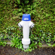 Fire hydrant in front of bush — Stock Photo