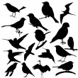 Bird vector — Stock Vector