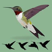 Humming bird vector — Stock Vector