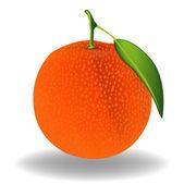 Orange. Vector — Stock Vector