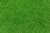 Green grass background texture — Stockfoto