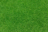 Textura pozadí zelené trávy — Stock fotografie