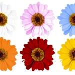 Flowers — Stock Photo #43486737