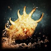 Seashell and water — Stock Photo