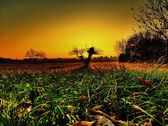 Sunset above the countryside - lonely tree at sunset - vineyards - autumn — Stock Photo