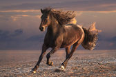 Running horse on sunset sandy beach — Stock Photo