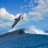 Beautiful oceanview and dolphin leaping out curly wave — Stock Photo