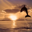 Постер, плакат: Beautiful dolphin jumping from shining water