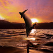 Постер, плакат: Sunset at the sea and dolphin jumping from water surface