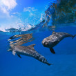 Two funny dolphins smiling underwater very close the camera — Stock Photo #13898274