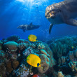 Underwater scene with two dolphins and yellow fish with coral background — Stock Photo