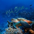 Big sea turle underwater — Stock Photo #13899678