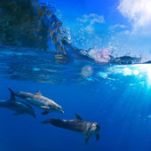 A small flock of dolphins playing in sunrays underwater — Stock Photo