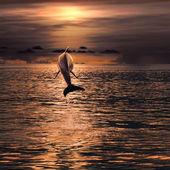 Красиво дельфин, прыгая из поверхности моря на закате — Стоковое фото