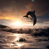 Beautiful sunset and dolphin leaping out trough sea foam — Stock Photo