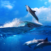 Dolphin leaping from breaking surfing wave and his family underw — Stock Photo