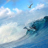 Dolphin leaping out from curly breaking ocean wave — Stock Photo