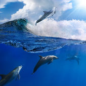 Family of happy playful dolphins one jumping from breaking wave — Stock Photo
