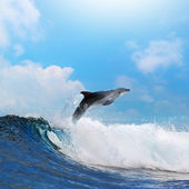 Happy dolphin leaping through breaking wave — Stock Photo