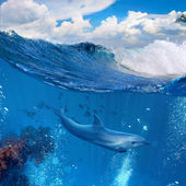 Ocean wave breaking and dolphin swimming underwater — Stock Photo