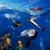 Colorful underwater coral scene with dolphins fish and beautiful — Stock fotografie