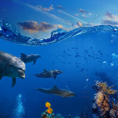 Underwater action a flock of dolphins hunting to fish — Stock Photo