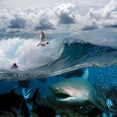 An ocean story with surfers and sharks — Stock Photo