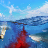 Dangerous bloody shark diving — Stock Photo