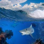 Ocean view with bull shark underwater — 图库照片