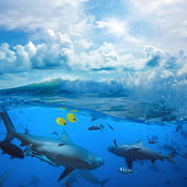 Ocean-view in sunlight and angry sharks underwater — Stock Photo