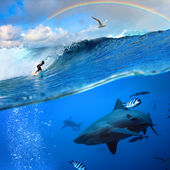 Surfer and wild shark underwater with rainbow on the sky — Foto de Stock