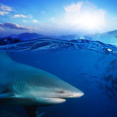 Separated image water surface in sunlight and angry shark underw — Stock Photo