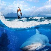 Windsurfer in ocean rainbow on sky and wild shark underwater — Stock Photo