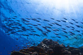 Fish shoal swimming over beautiful coral reef under reflecting water surface with sunrays in corner — Stock Photo