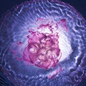 Sun shining through water surface and Pink Jellyfish underwater — Stock Photo