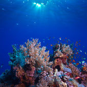 Underwater scenery beautiful coral reef full of colorful fish — Stock Photo