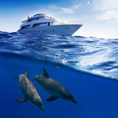 Underwater splitted by waterline template. Two bottlenose dolphins swimming under boat — Stock Photo