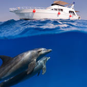 Submerged image splitted by waterline two doplhins swimmimng underwater under dive boat — Stock Photo