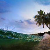Tropical sea view with green surfing wave splashing on sandy beach and palm tree — Stock Photo