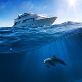 Underwater splitted by waterline postcard template. Bottlenose dolphin swimming under boat — Stok fotoğraf