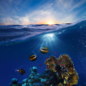 Marine life design template beautiful coral reef with fishes underwater sunset skylight splitted by waterline — Stockfoto