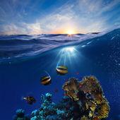 Plantilla de diseño de vida marina hermosos arrecifes de coral con peces bajo el agua al atardecer del tragaluz dividido por la línea de flotación — Foto de Stock