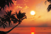 Tropical beach with palm trees at sunset time and reflections on water surface. — Stock Photo